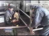 Новости Перми: в Чернушке гибнет скот