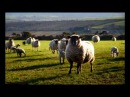 J.S.Bach-E.Petri Sheep May Safely Graze , Aria from Cantata BWV 208