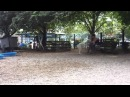 Гуляем в парке для собак на Union Square