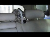 Nunca deixe seu cachorro dentro do carro no lava jato.flv