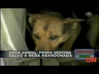 Собака спасла брошенного новорожденного малыша