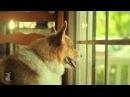 Пародия на клип Carly Rae Jepsen - Call Me Maybe