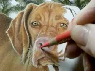 Рисуем собаку ...Draw_the_correct (Рисунки, как правильно нарисовать)