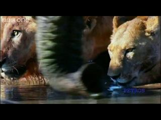 David Attenborough and Louis Armstrong - What a wonderfu...