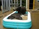 Надувной бассейн и слонята