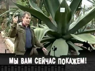 БОТАНИЧЕСКИЙ САД СПб 2012