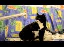 Cat vs vacuum cleaner
