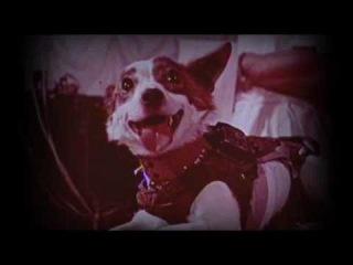 Russian space Dogs - Белка и стрелка - звездные собаки