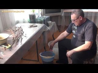 Технология выращивания винограда -- ч.1 Подготовка винограда к высадке