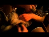 Какачка(кошка) - Faint(cover)