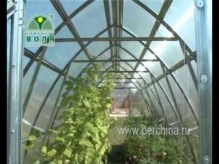 Теплица Дачная-Стрелка от компании Воля. Видео из группы http://vk.com/teplica_rm