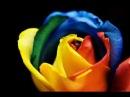 Радужные Голландские Розы от BB.