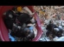 Kennel Flash In The Night . Litter N ,4 boys and 2 girl were born the 22.09.2011.