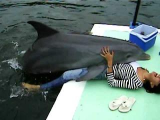 Анимал порно с дельфином