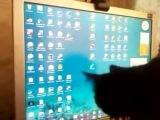 Мой кошак интересуется дельфинами на мониторе)