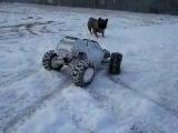 RC Traxxas summit vs French bulldog in snow (Roky)