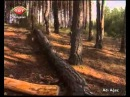 DERS COGRAFYA ORMAN 1 TURKIYENIN BITKI ORTUSU AGAC VE INSAN OKSIJEN DEPOSU ORMANLARIMIZ - YouTube