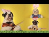 Easter Pooch Concert Fun Song ecard at AmericanGreetings com