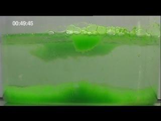 euronews science - Электричество из водорослей