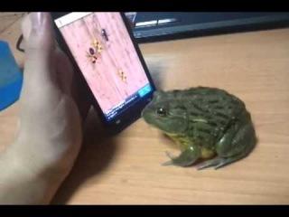Жаба играет в компьютерную игру