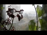 Danila Rastv !!! А  дождь всё льёт и льёт !!!