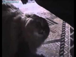 Кошка учится мяукать.mp4