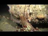 Fathoms Deep Protecting the Seafloor-- Narrated by Alexandra Cousteau