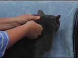 Giving an Injection to a Cat