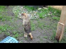 Sara and Kira (marmota)