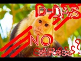 D-DAS- NO STRESS