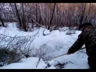 Собака и оходники против 2 медведей.