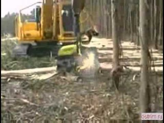 Однорукий лесной монстр