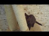 Sandy-cat's MARKIZA BRI b -SALE!