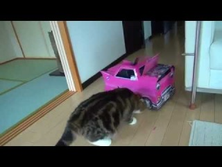 Кот хочет войти в коробку-машину)