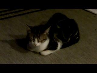 Still, still, still - german lullaby (ukulele and cat)