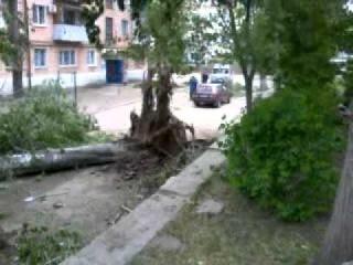 В Жирновске ураганный ветер повалил дерево 02.05.2012