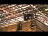 Видео к фильму «Новый Человек-паук» (2012): Видео со съёмок