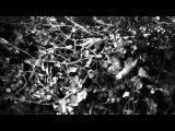 Clip Gojira L'Enfant Sauvage