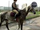 Global Star TV P.R.O.HORSE 04 Масти лошадей