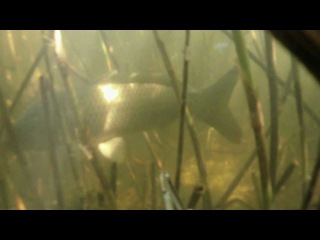 08.06.2012. Подводная охота в Астрахани. River House Hotel.