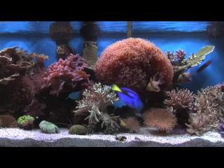 Fish Tank from the Best Selling DVD on Amazon.com