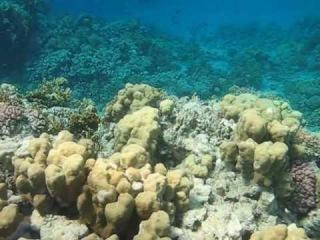 Подводная жизнь возле понтона отеля Tiran Island Corinthia 4