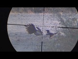 Air rifle hunting #10 Shooting Crows Rooks and Magpies - pest control