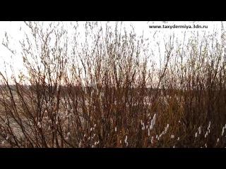 Охота на гуся Весна 2011-1.mp4