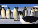 Get a sneak peak of the 'Penguin-cam' infiltrating the colony
