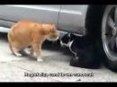 Cearta intre pisici :))