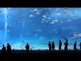 Океанариум острова Окинава Япония 沖縄の太平洋の島の水族&#3920