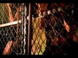 Don Omar feat Daddy Yankee - Miss Independiente