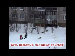 Человек кусает собаку: монолог догхантера