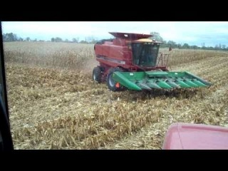 Farming Case IH 2388 combining corn MX255